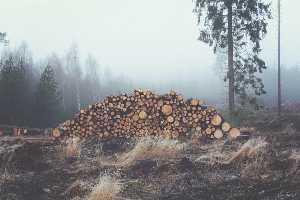 Лесорубы в Шабалинском районе вырубили деревья на 250 тысяч рублей