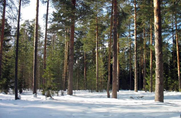 Лесные конкурсы начнут проводить со второй половины 2018 года