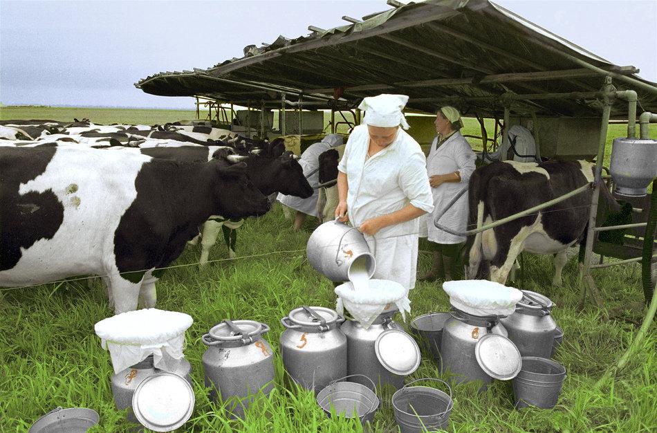 На развитие агросектора кировские производители получат 600 миллионов рублей