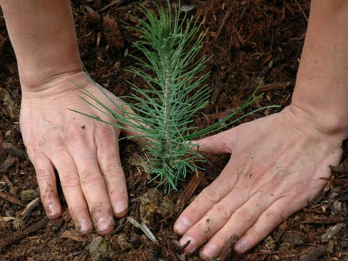 Юные лесоводы Кировской области поедут в «Орлёнок»