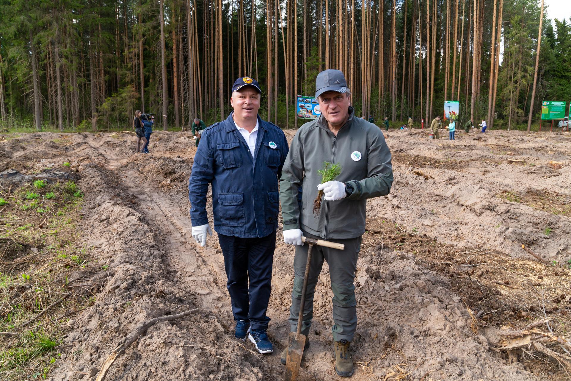 В Порошино восстановили лес возле тропы здоровья