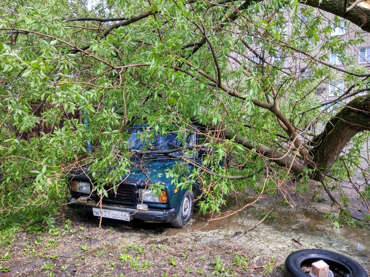 Ураган в Кирове. Как в городе ликвидируют последствия?