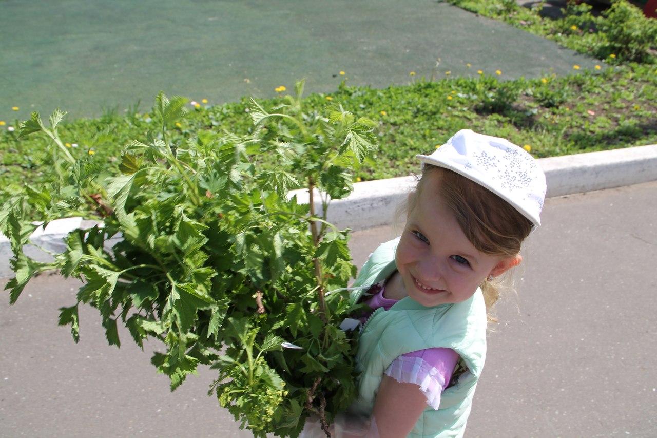 Самые маленькие кировчане высадили свой «Сад Победы»