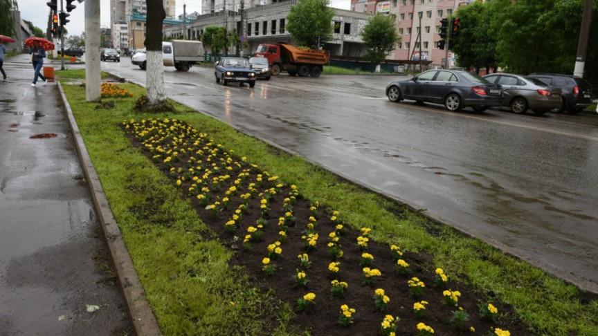 Где цветы?  В Кирове экономят на озеленении?