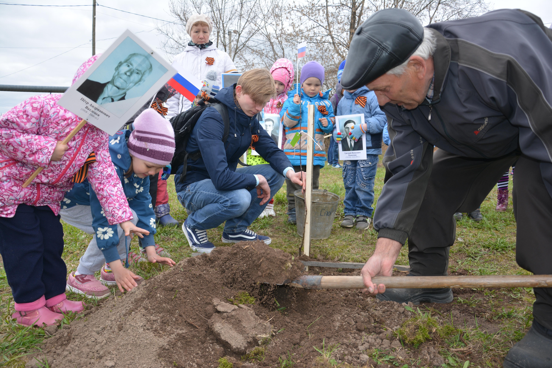 Сады Победы зацветут в Лебяжском районе