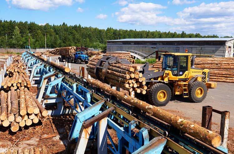 Кировская область в пятерке крупнейших лесозаготовителей России