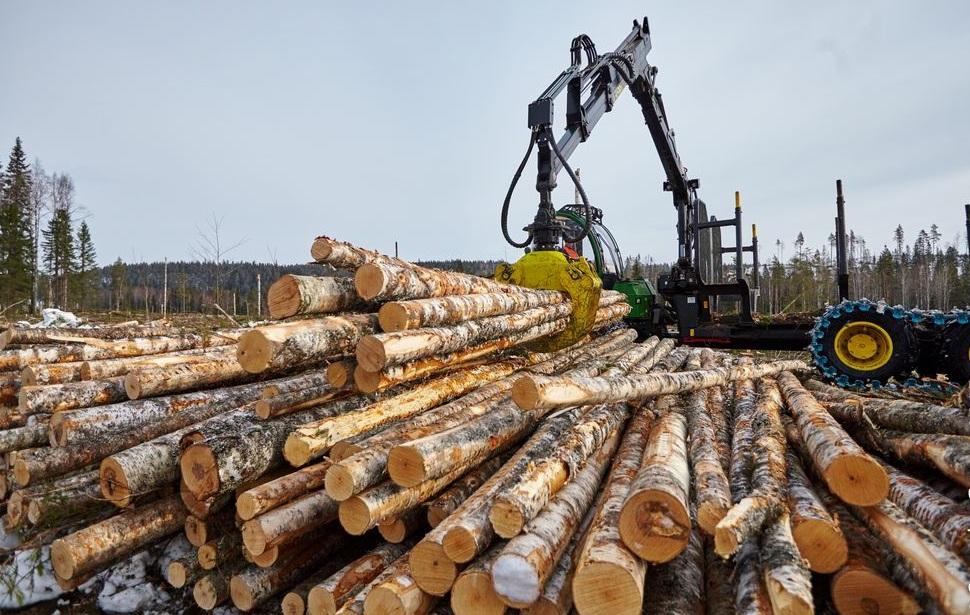 Доходы от лесной отрасли в Кировской области увеличились почти на треть