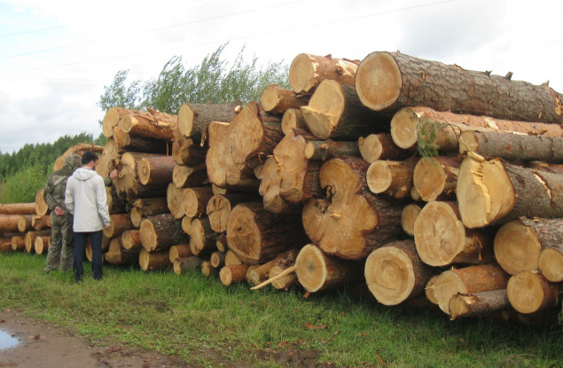 В Кировской области лесничий причинил ущерб лесному фонду более чем на 4 млн рублей