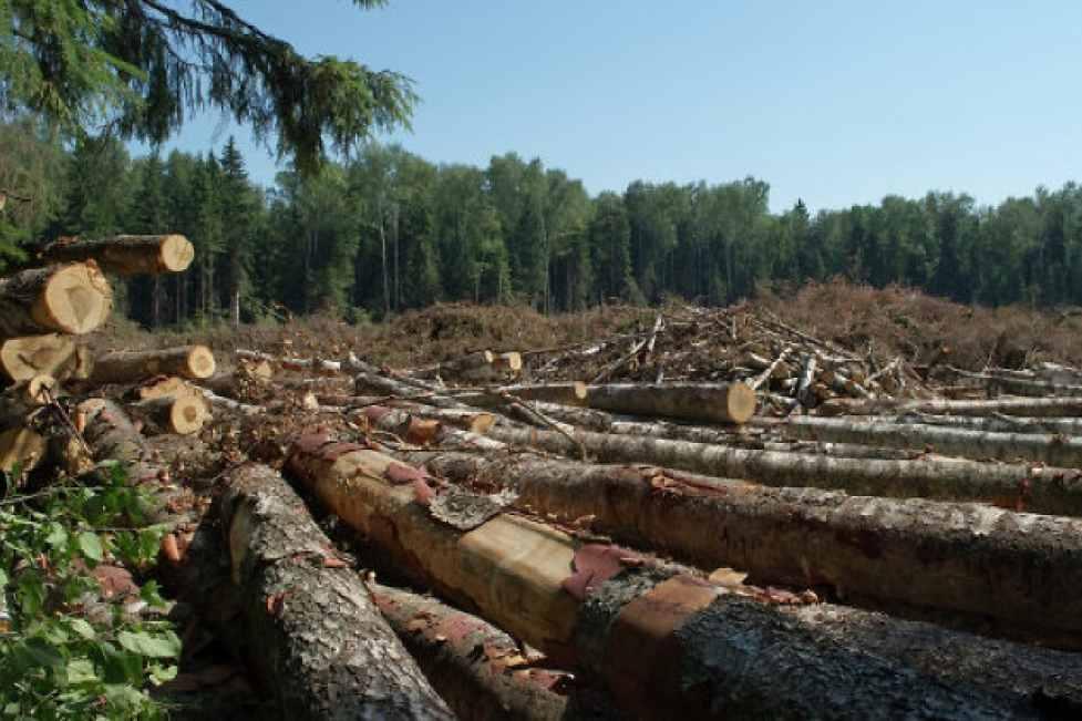 В Кировской области продолжают бороться с незаконным оборотом древесины