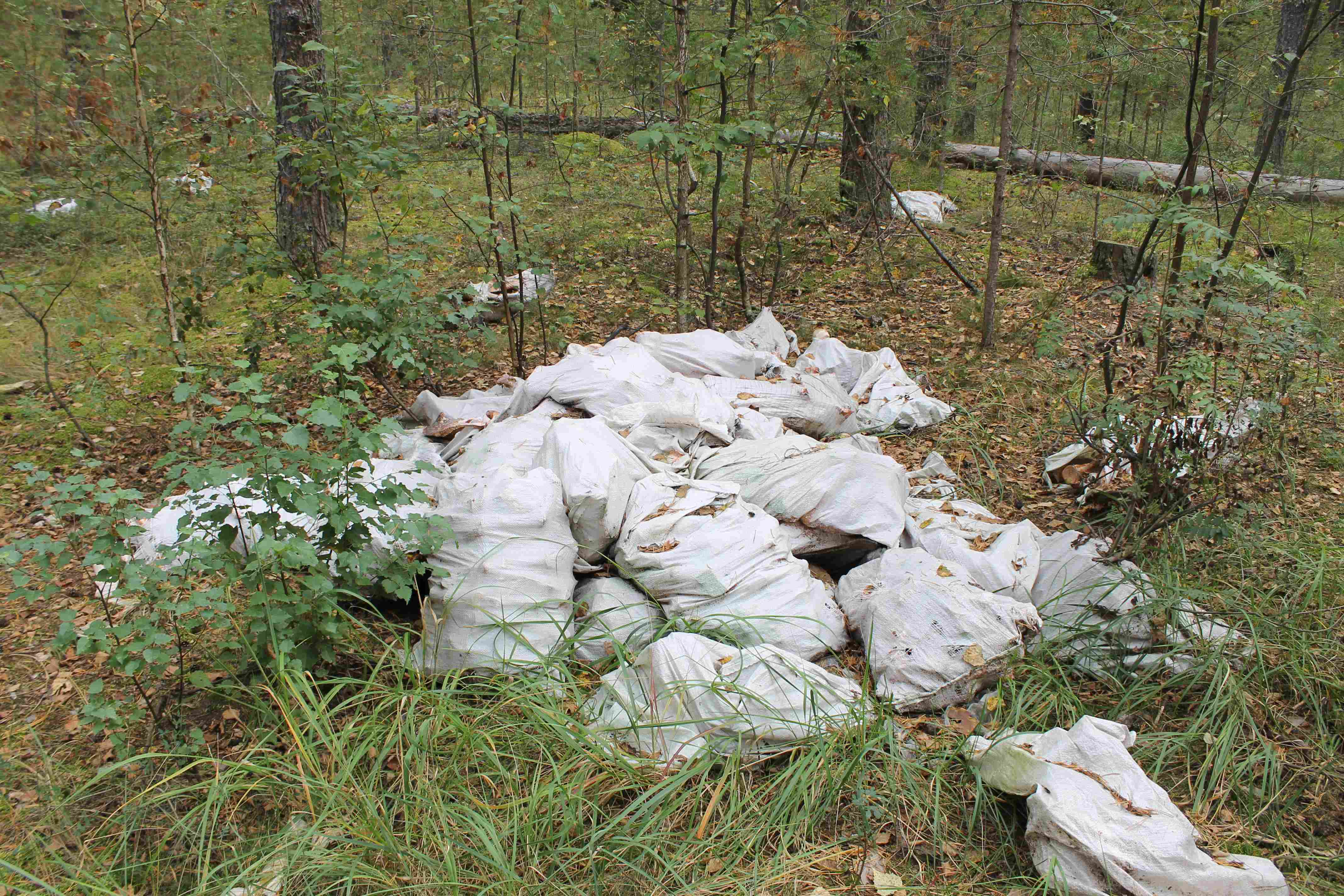 Активисты в Кировской области обнаружили свалки с останками животных
