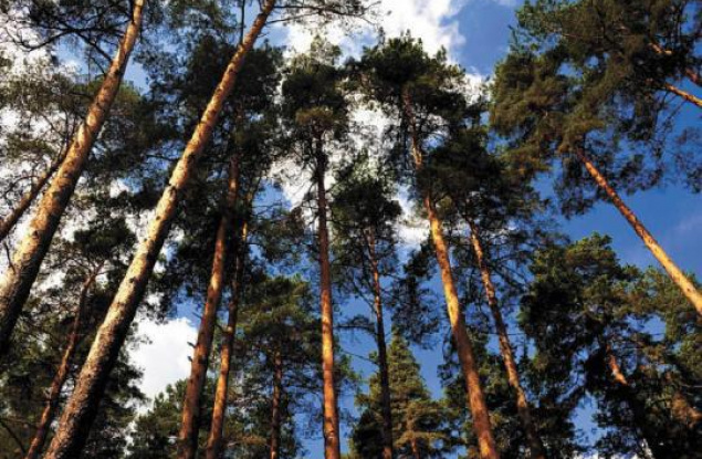 Лесной комплекс Кировской области приносит все больше налогов