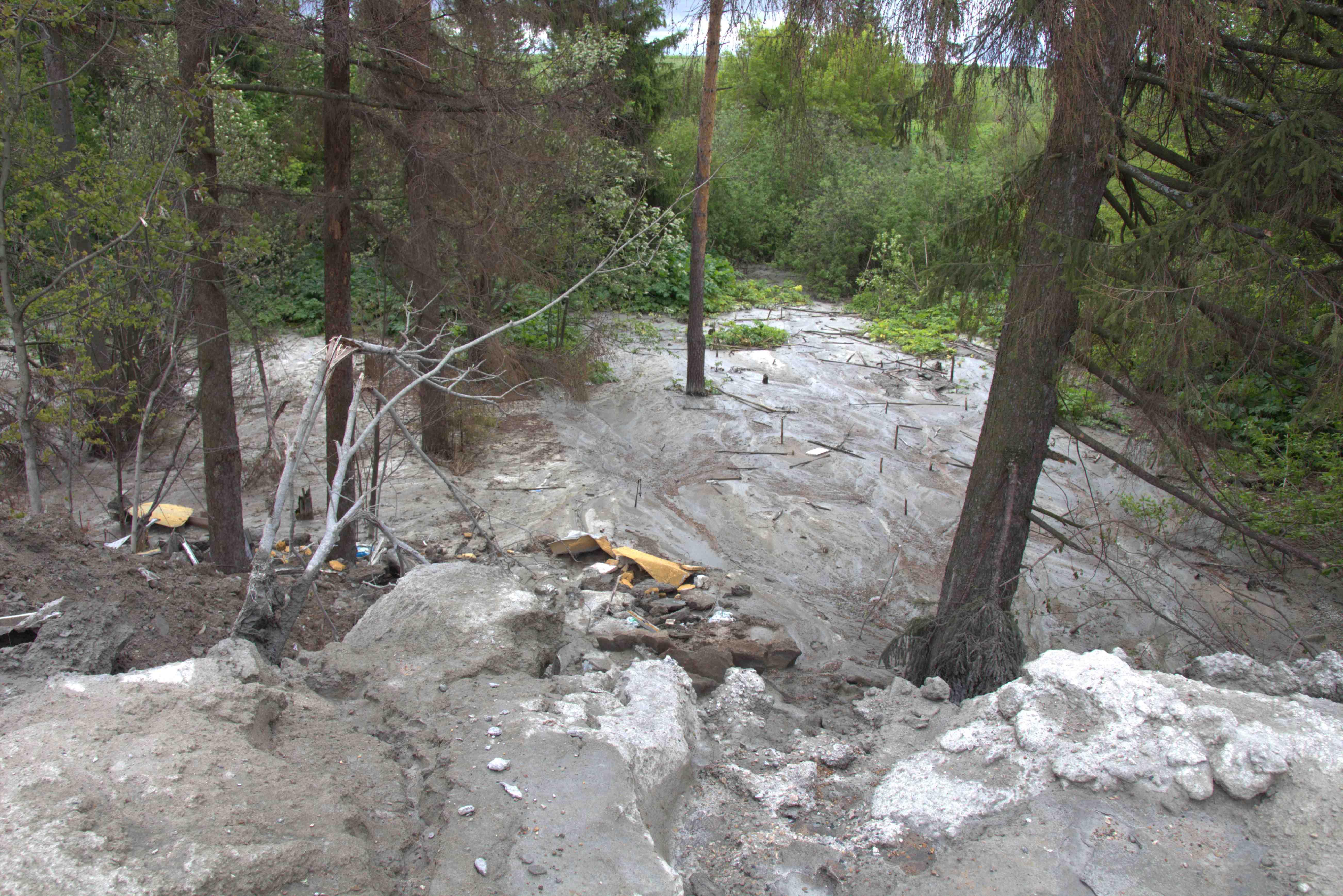 Ущерб забетонированному лесу в Учхозе составил более миллиона рублей