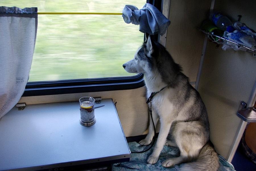 В поездах из Кирова теперь можно перевозить животных без сопровождения