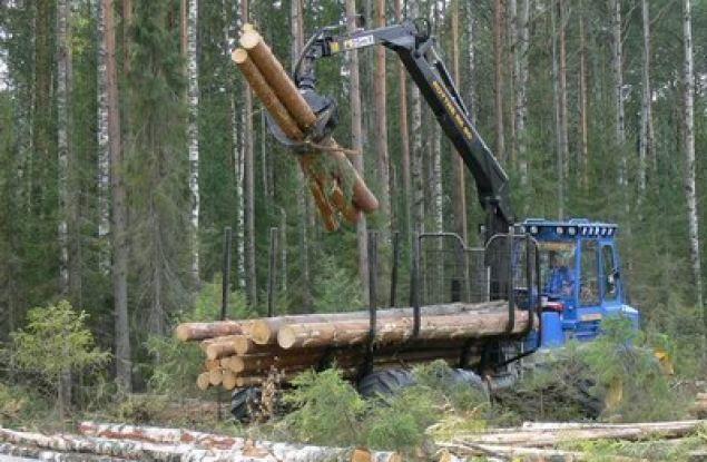 В Кировской области сократилась незаконная заготовка леса