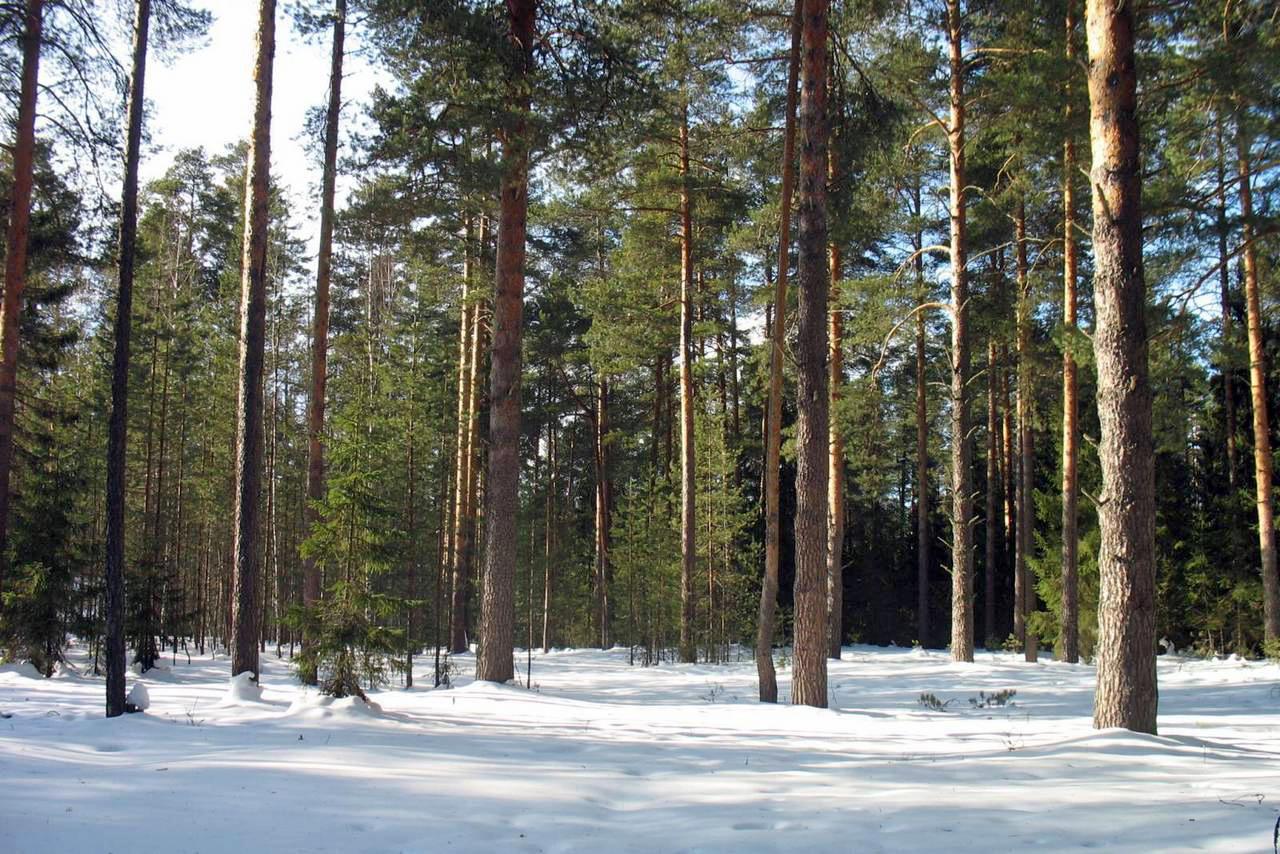 Леса Кировской области пострадали на 125,4 млн рублей