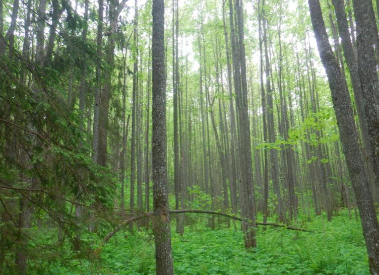 Пчелы «помешали» вырубке уникального леса в Кировской области