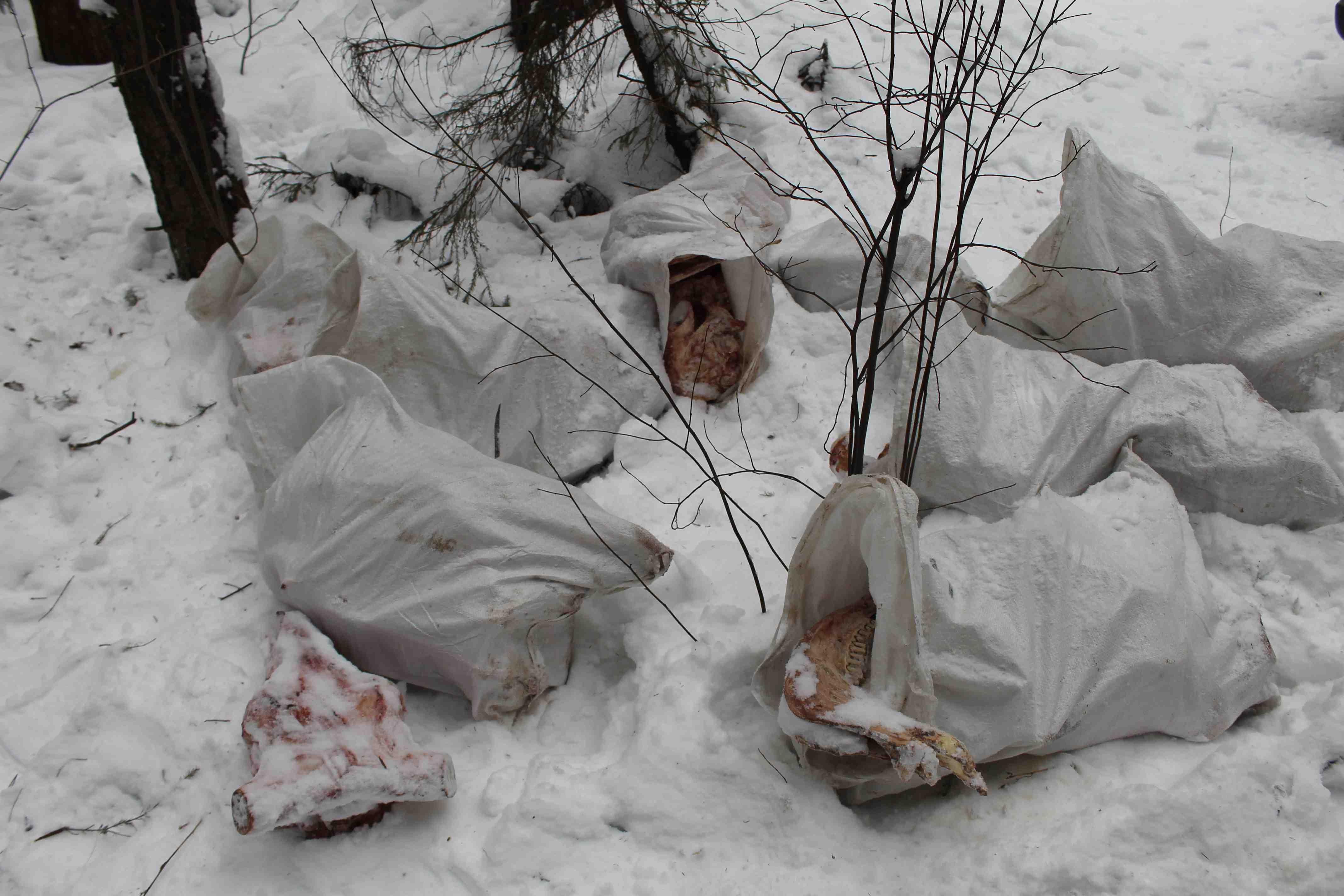 Соседями жителей Малой Субботихи стали останки животных