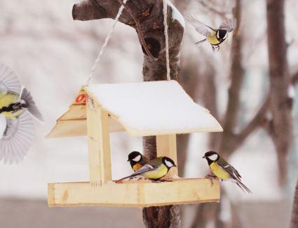 Учимся помогать птицам правильно