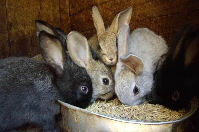 В кировский «Водоканал» приняли специалиста по кроликам