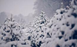 Погода в Кирове. Солнце спешит поздравить наших Защитников