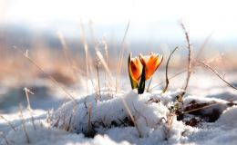 Погода в Кирове. Весна набирает обороты