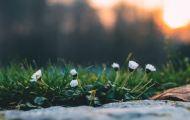 Весна наступает – подтверждают астрономы