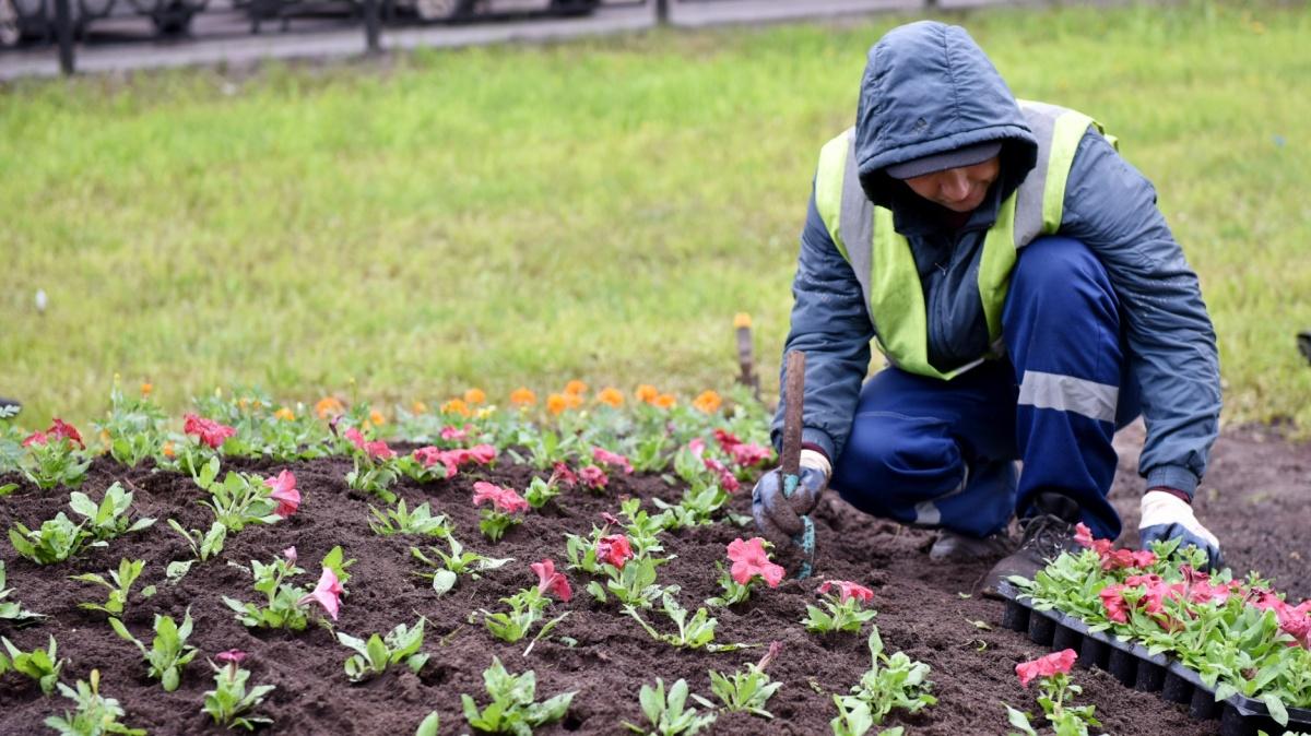 Ковер из 170 тысяч цветов украсит наш город