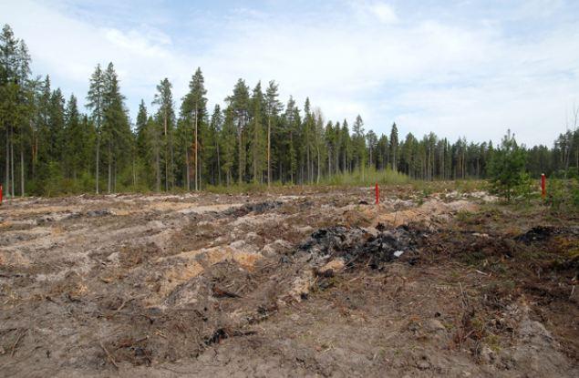 100 миллионов рублей поступило в бюджет области от лесных аукционов уже в этом году