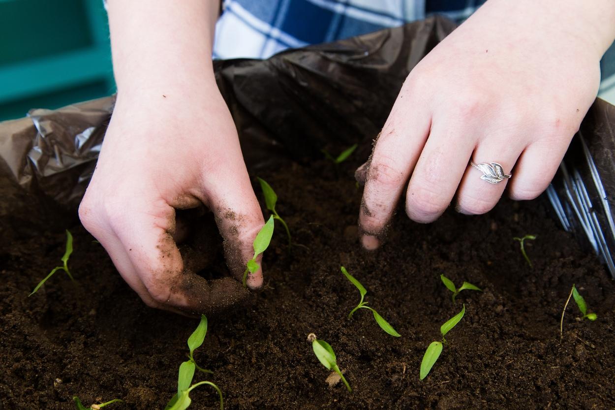 В Кирове дан старт новому сезону движения «Юный садовод»