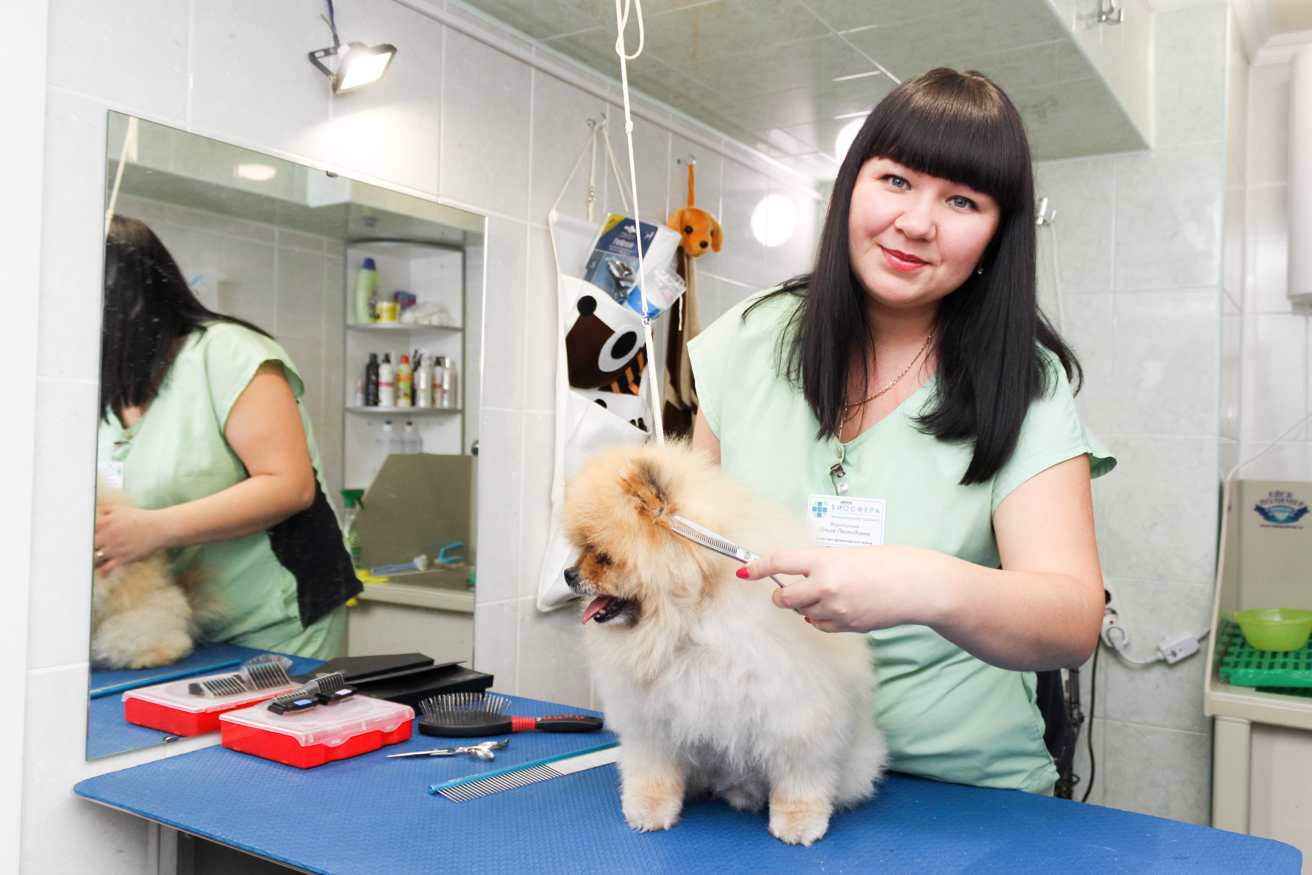 Красоту домашних животных доверяйте профессионалам
