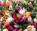 6000 тюльпанов разных сортов - рекорд Ботанического сада ВятГУ