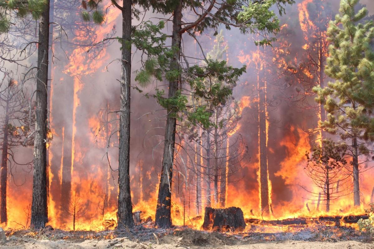 Не допустить пожар в лесу