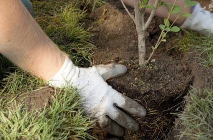 Представители «Единой России» в рамках всероссийской акции по озеленению городов высадят 3 миллиона деревьев