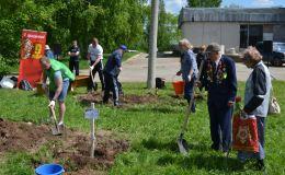 В Кирово-Чепецке высадили яблоневую аллею в память о героях-освободителях
