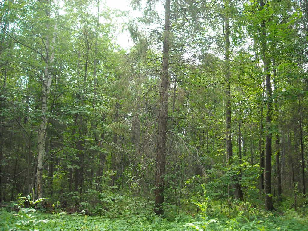 В области восстановят более 37 тысяч гектаров леса