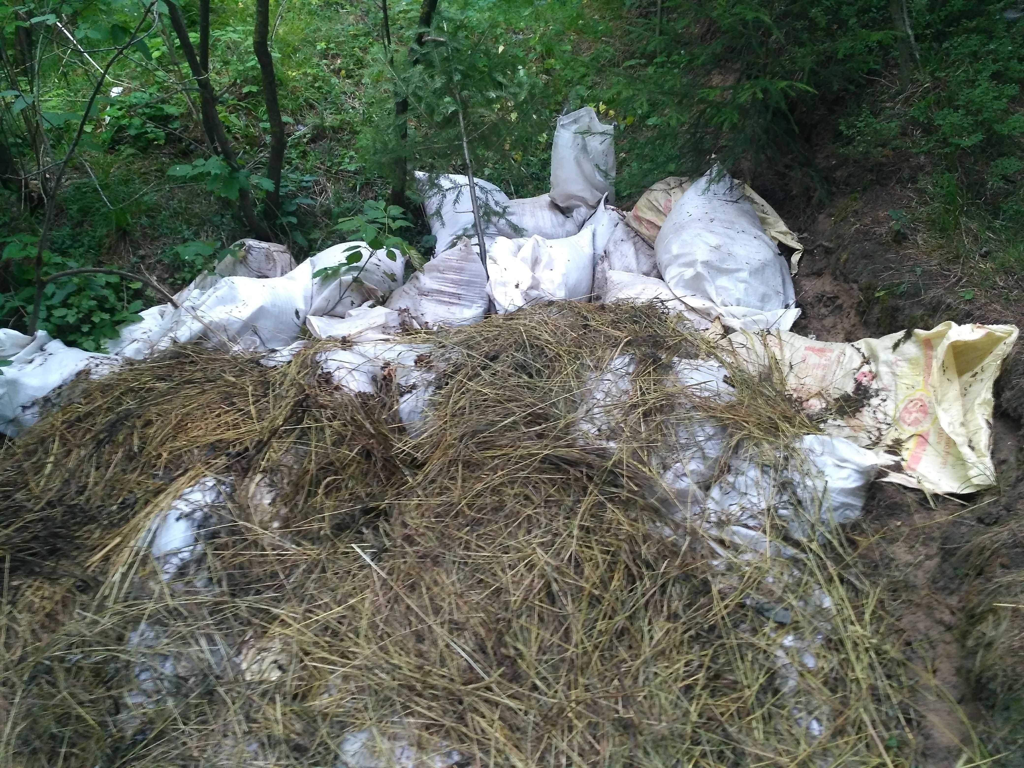 Лес в черте Кирова стал навозной свалкой