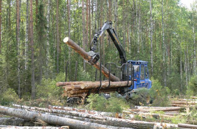 Лес принес Кировской области 1,4 млрд. рублей