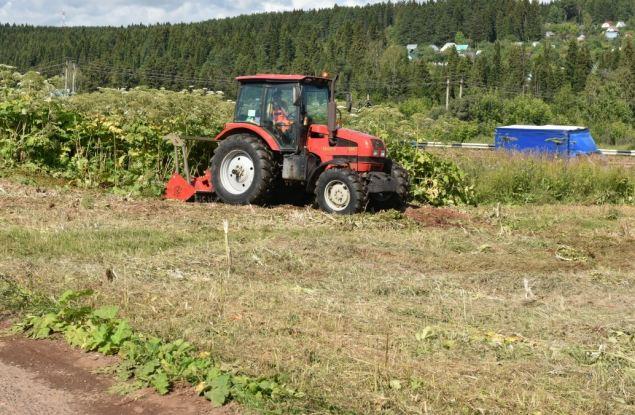 80 тысяч квадратных метров борщевика ликвидировано в Кирове