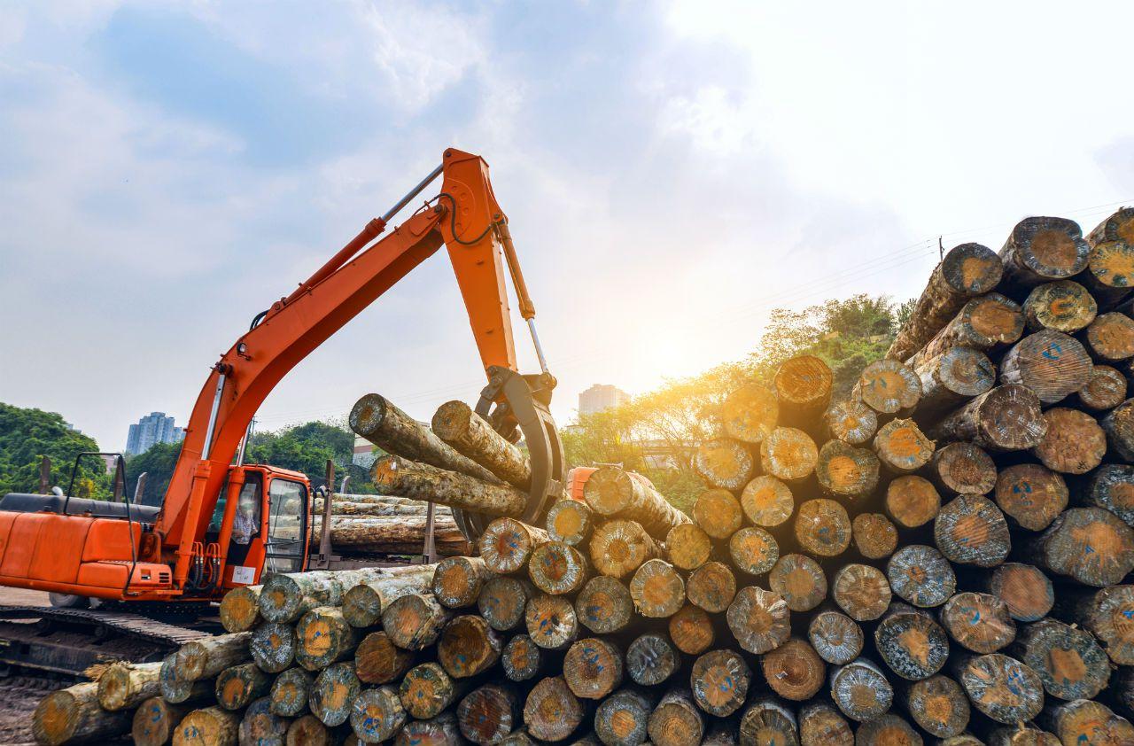 Кировской области обещают существенное увеличение выручки предприятий лесной отрасли