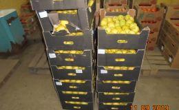 В Кировской области изъято 8 тонн «запрещенки»