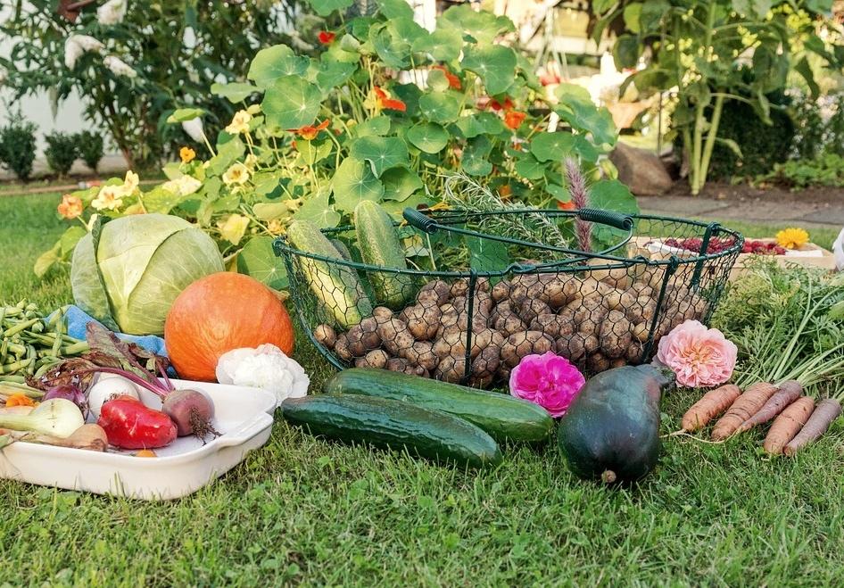 Чем заняться садоводу в сентябре?