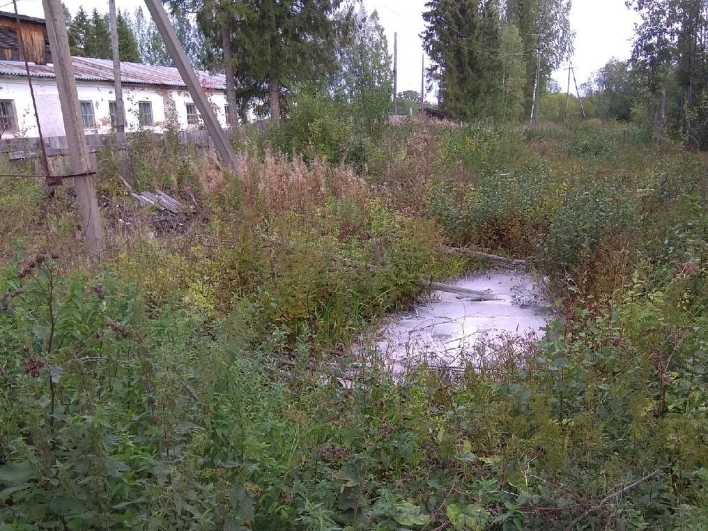 В Кумёнском районе водный объект загрязняют биологическими и химическими отходами