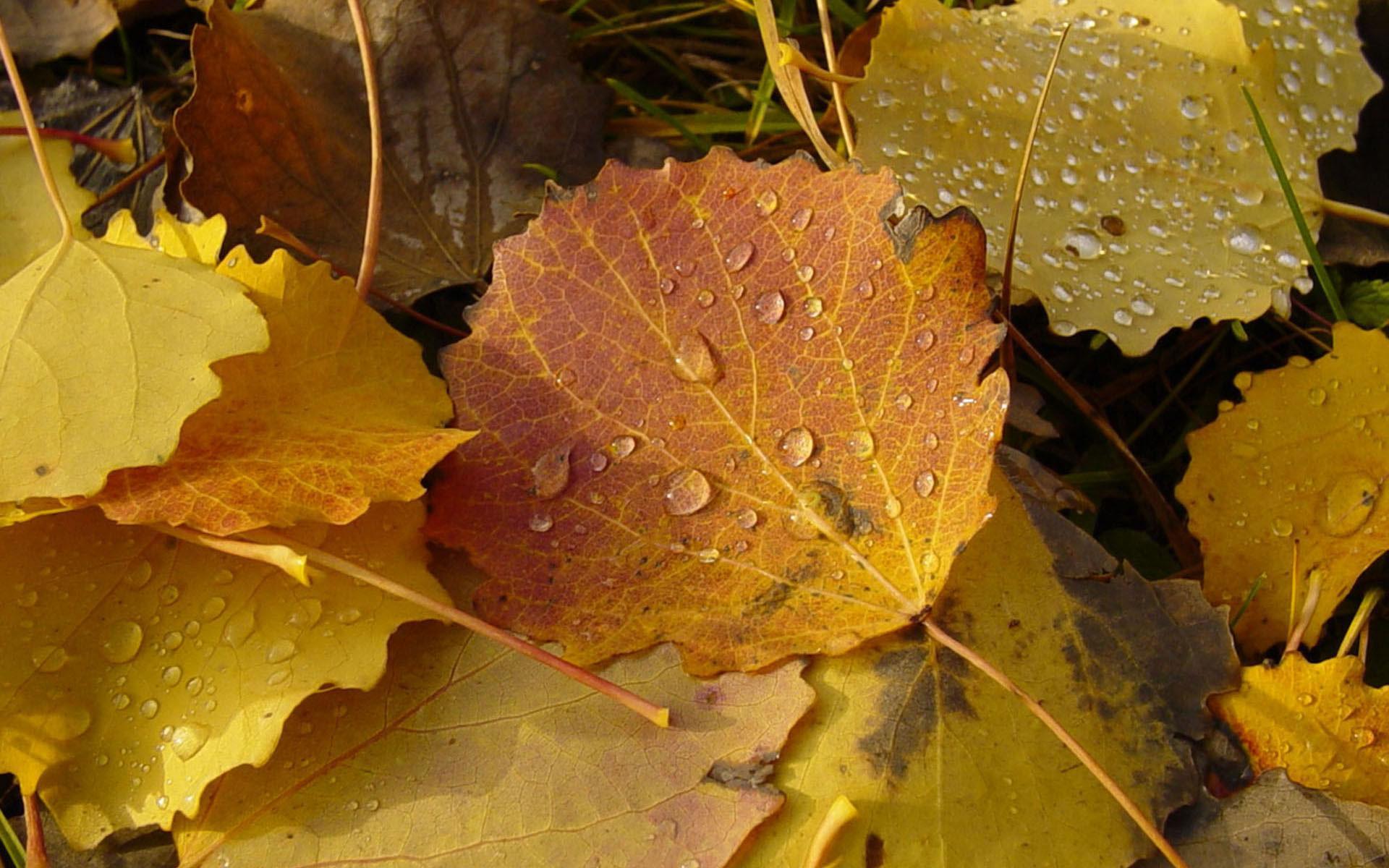 Погода в Кирове. Уже чувствуется октябрь