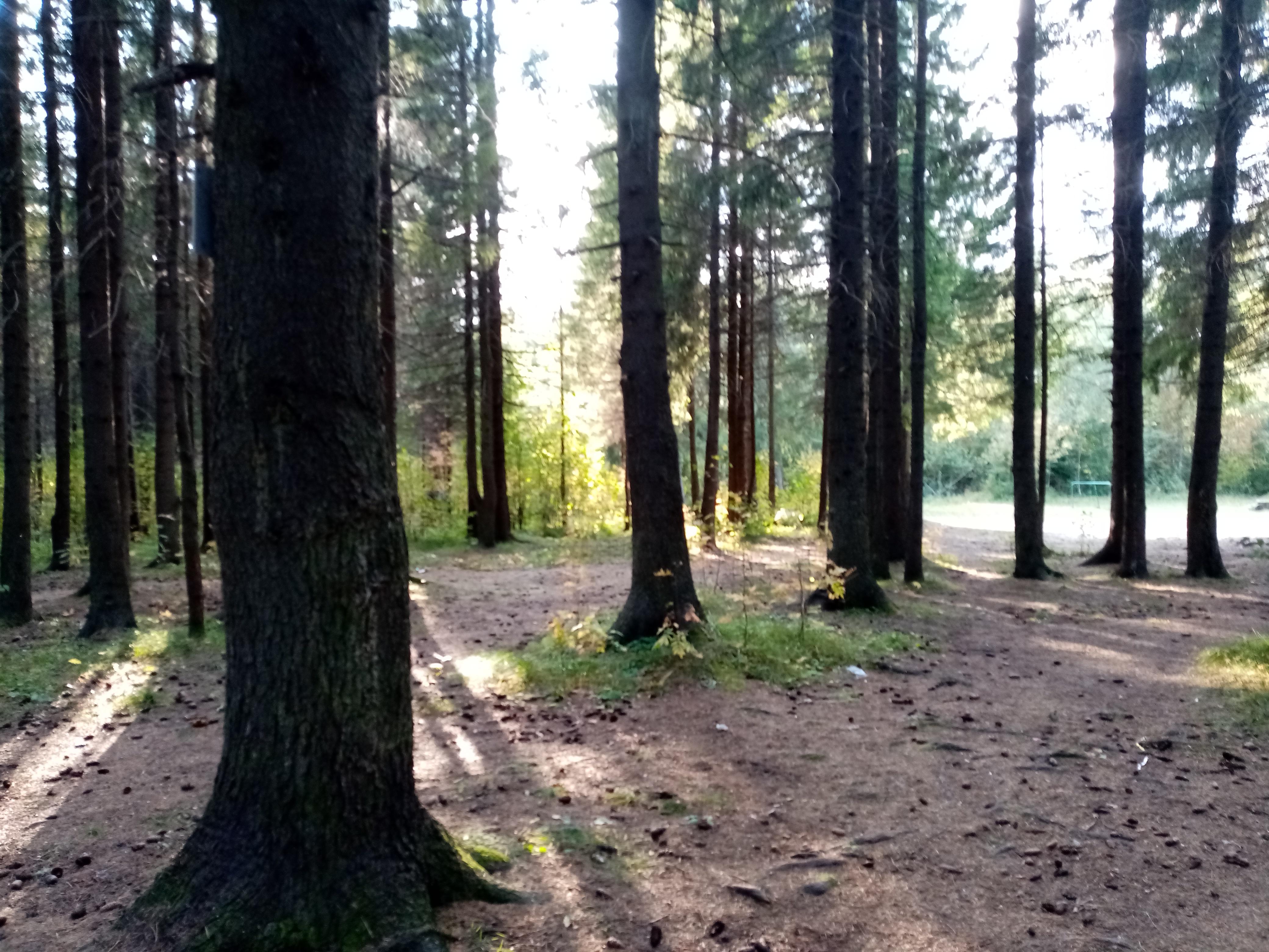 В Кирове обсудили судьбу природного наследия Вятки